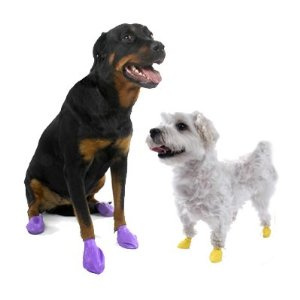 Can Dogs Feel The Padding On There Feet