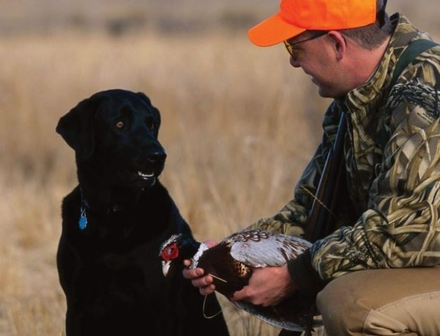 hunter with a gun and dog