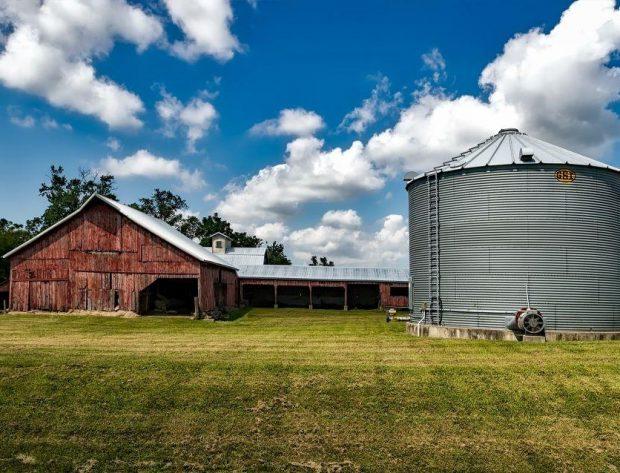 corn field, clouds, blue sky
