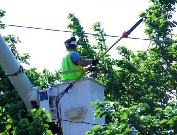 Lineman trimming tree near power line