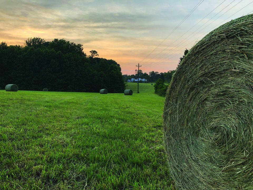 Photo image of hay bales in a rural landscape at dusk