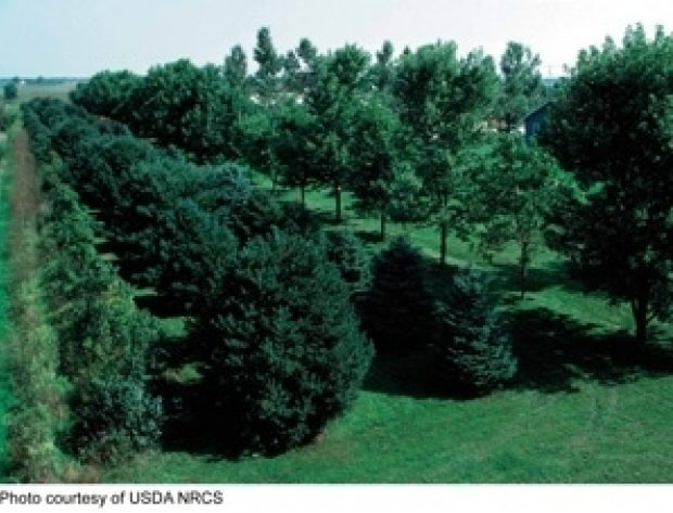 Photo of a tree windbreak from USDA (U.S. Department of Agriculture) NRCS (Natural Resources Conservation Service)