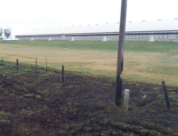 pole burned surrounded by burned vegetation