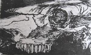 Equine skull