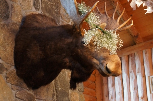 Wickham Park Moose