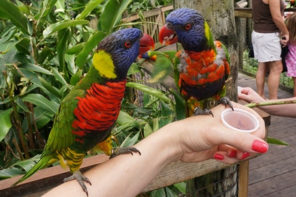 Feeding birdies