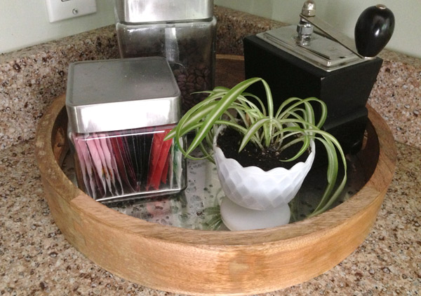 kitchen-plant