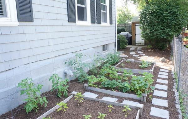 veggie garden 2013