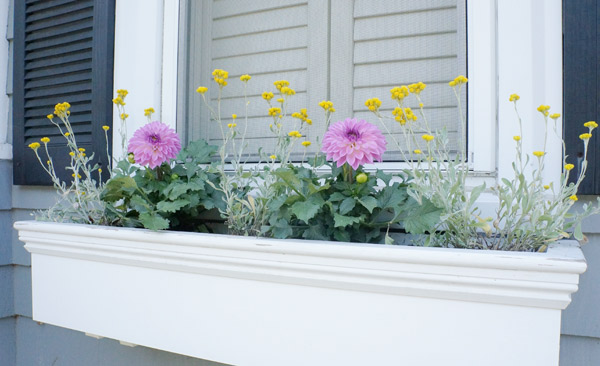 window box 2013