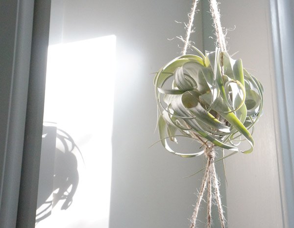 curly-plant-closeup