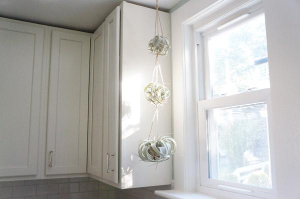 hanging-air-plants