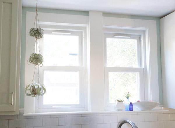 window-plants