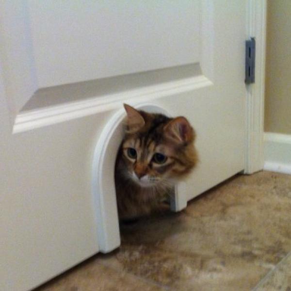 kitty mouse door