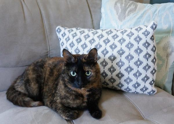 sweater pillow kitty model