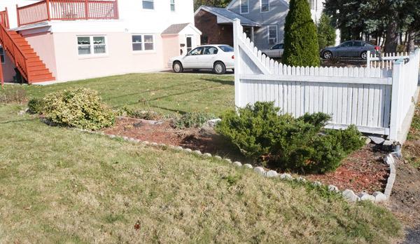 frankie-garden-progress