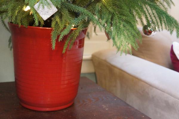 undressed tree pot