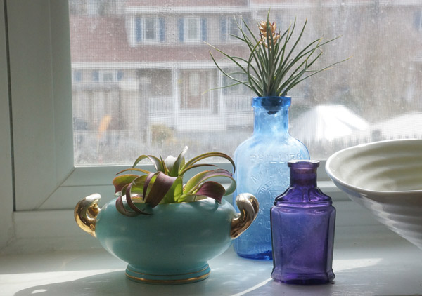 air plant sugar dish