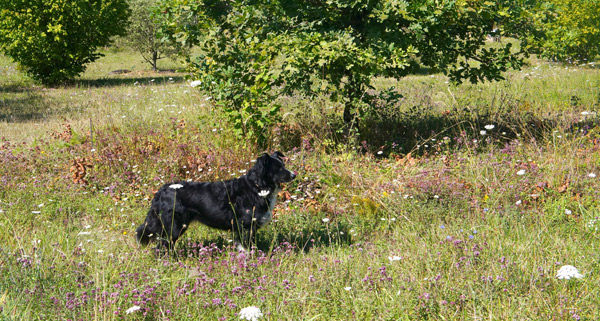 truffle-puppy-1