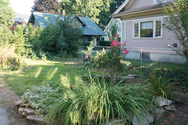 millie the flip house back yard week 2 progress