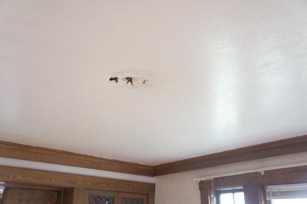 millie the flip house canvas ceiling