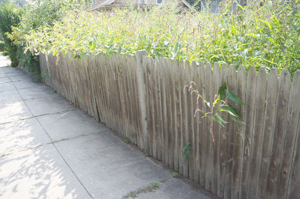 millie-before-old-fence