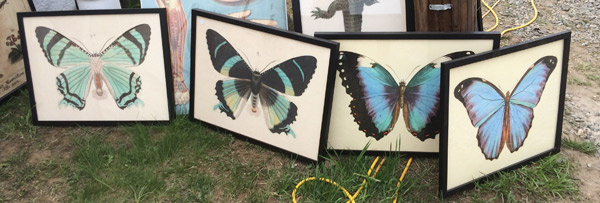 brimfield-butterflys
