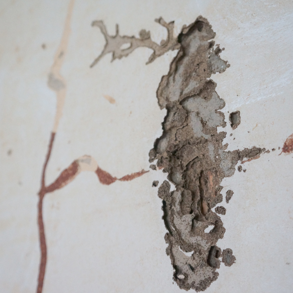 Dori Flip House Demo termite damage