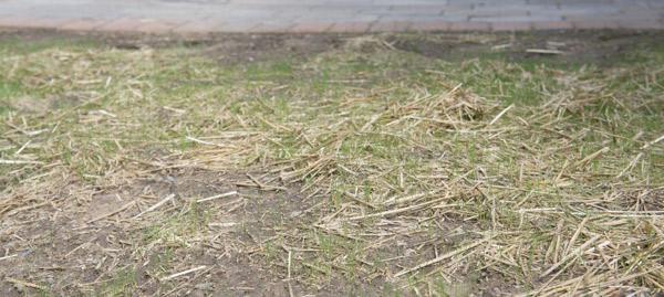 dori-w8-grass2