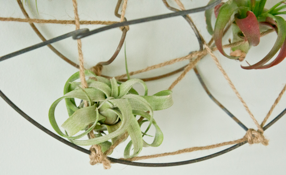 jar-caddy-air-plant-holder-close