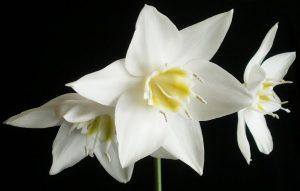 flores invierno