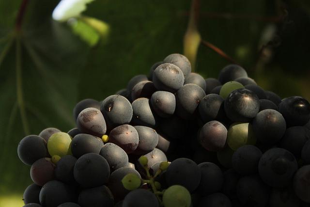 Vino Natural