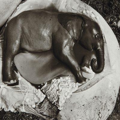 Peter Beard elefantes