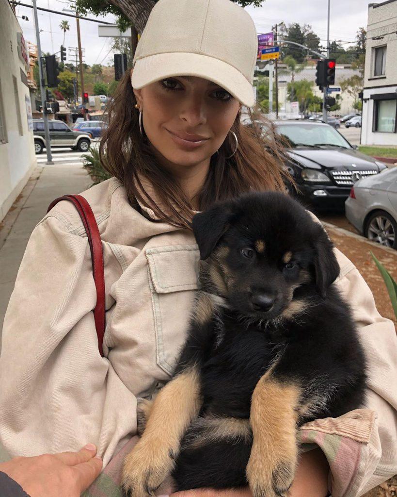 mascotas (1) adopción