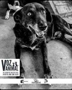 Iniciativas sociales: Voz animal
