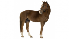 Icon for Equine Nutrition