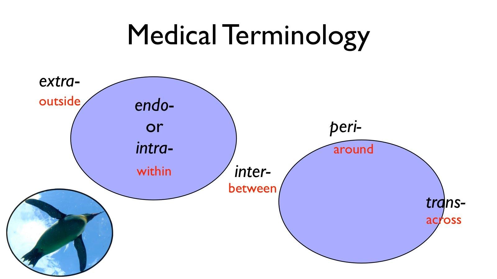 medical terminology a word association approach fall 2018 maine