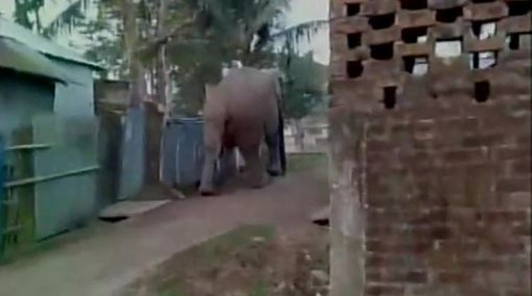 Elephant Attacks Indian Village – India may be Asia's Florida