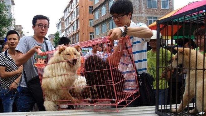 Stop the Dog Meat Festival