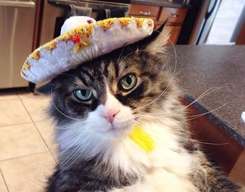 12 Cats Celebrating Cinco de Mayo