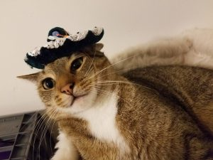 A cat with a sombrero