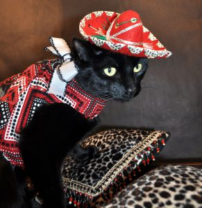 A black cat in a red sombrero