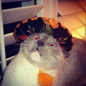 A horrified cat in a sombrero