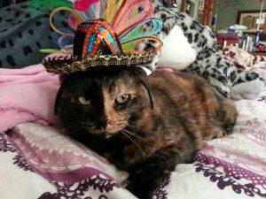 Cat in a sombrero