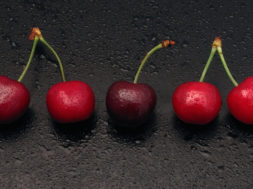 Paris of cherries and one single cherry