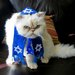 Halloween Costumes for Cats and Dogs