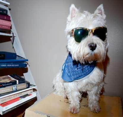 Frankie.com.au, hipster dog