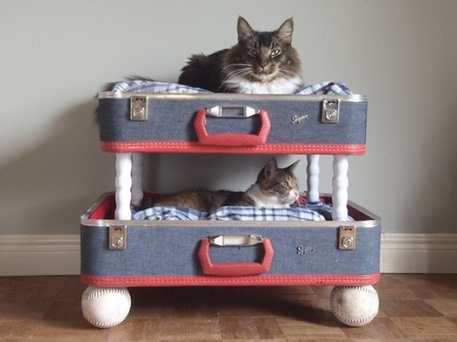 Diy Bunk Beds For Pets Craftfoxes