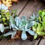8 Crafty, Playful, Clever DIY Wreaths