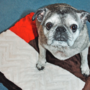Patchwork Pet Bed (Free Sewing Pattern)
