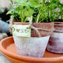 Best Beginner Indoor Gardening Projects